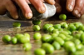 Selección de las olivas antes de entrar a la molienda