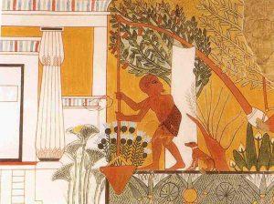 el tratamiento de las aceitunas para fines comestibles se realiza desde tiempos ancestrales