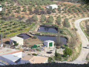 Alpechín en equilibrio con los cultivos de olivos