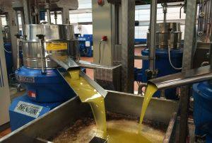 Extracción de aceite de oliva en la actualidad
